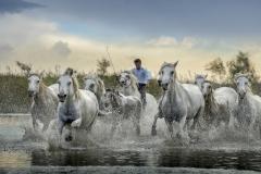 DANIEL_MORIN_DSC1958_chevaux_club