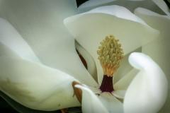 DANIEL_MORIN_DSC5912_fleur
