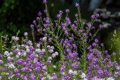 Bernard_Legros-FPF_UR11_Botanique-3