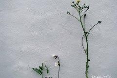 Botanique3.M.O.Cweb-OIL