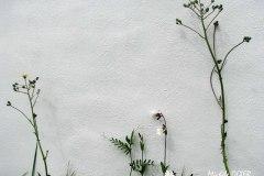 Botanique4.M.O.Cweb-OIL