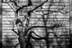 Confinement-Jardins-04_DSC7899b